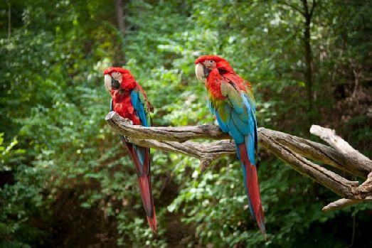 Пернатые обитатели зоопарка