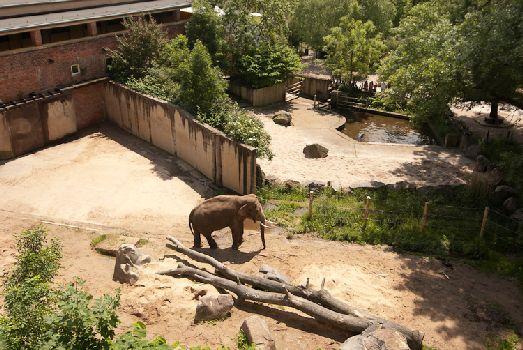 Одинокий слонёнок